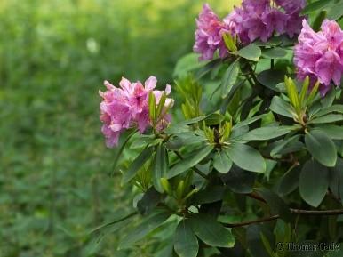 Pferdolit Pflanzendünger